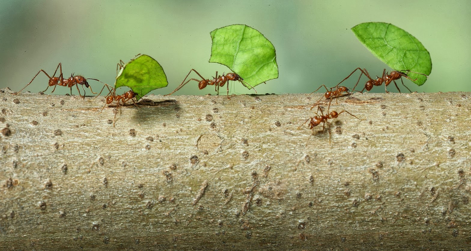 mravi2