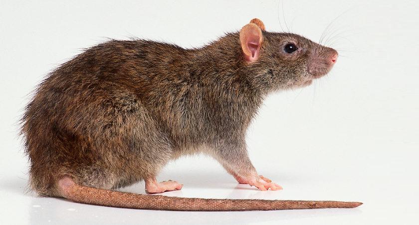 Identifikacija štetočina – infestanata
